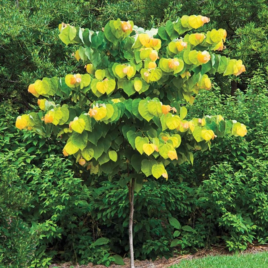 Lovely Flowering Tree Ideas For Home Yard To Copy Now 15