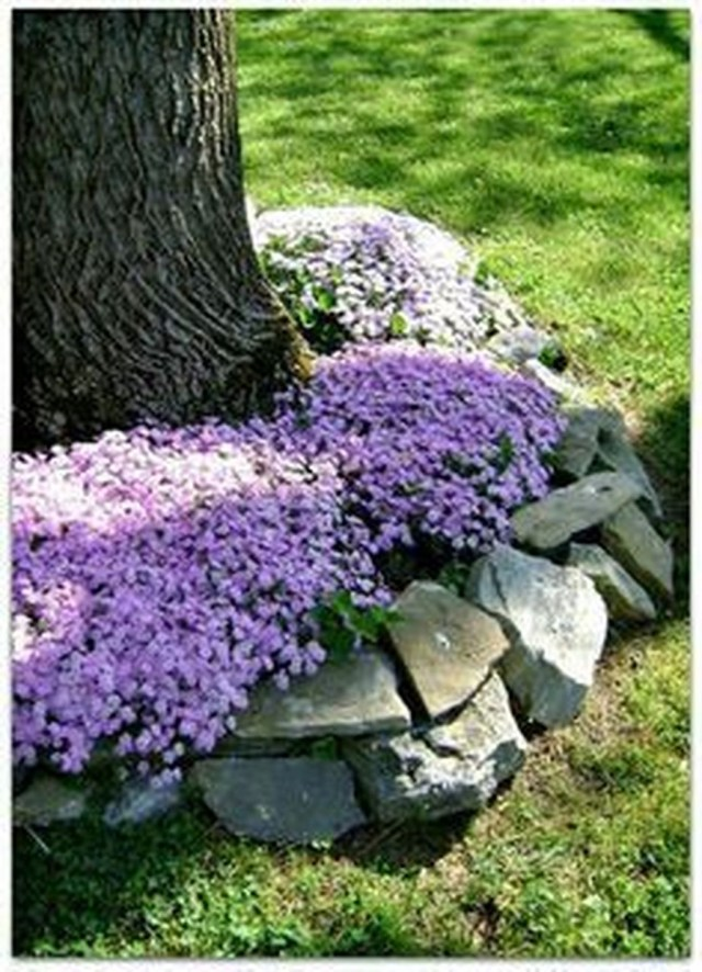 Lovely Flowering Tree Ideas For Home Yard To Copy Now 34