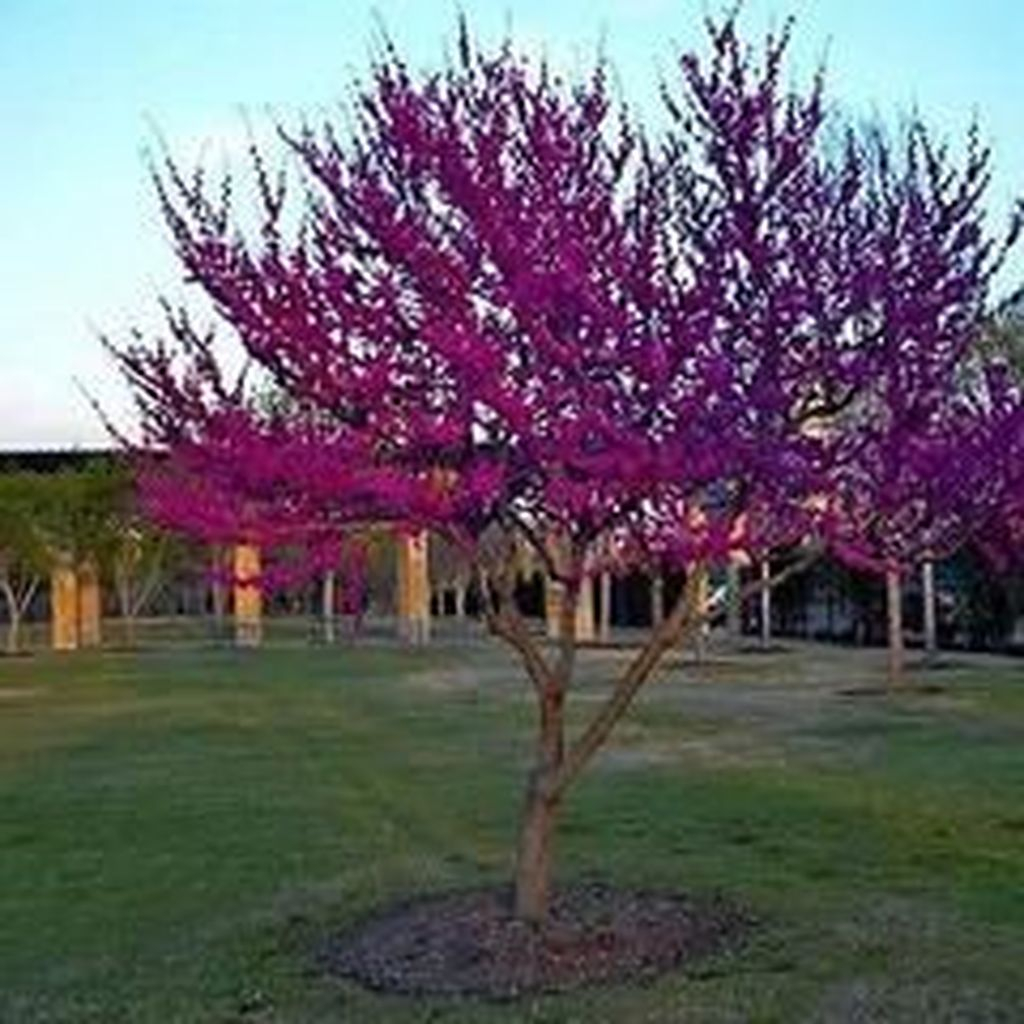 Lovely Flowering Tree Ideas For Home Yard To Copy Now 37