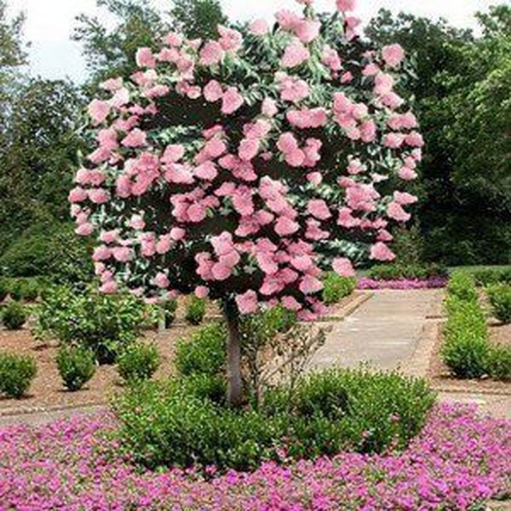 Lovely Flowering Tree Ideas For Home Yard To Copy Now 38