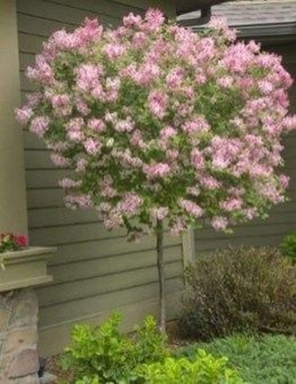 Lovely Flowering Tree Ideas For Home Yard To Copy Now 39