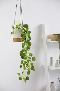 Smart Interior Design Ideas With Plants For Home 11