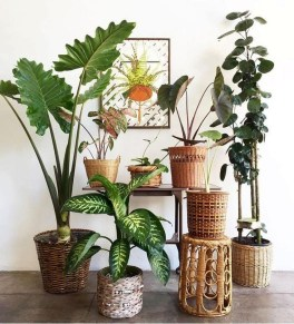 Smart Interior Design Ideas With Plants For Home 20