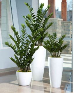 Smart Interior Design Ideas With Plants For Home 28