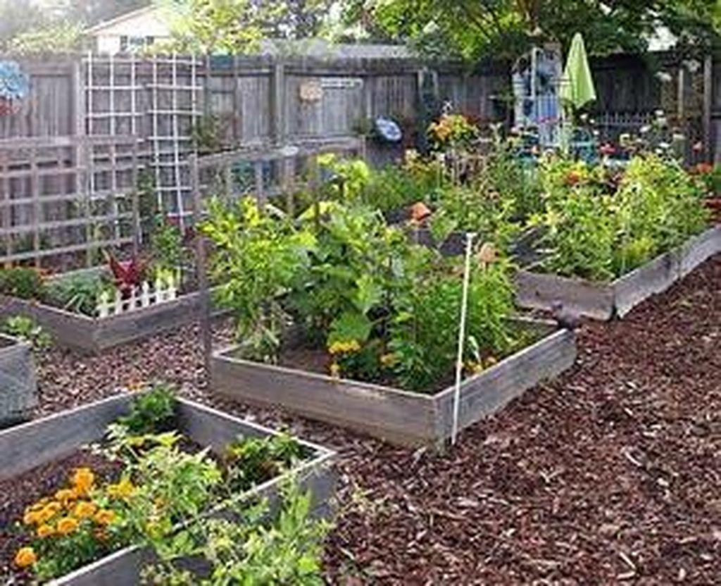Lovely Vegetable Garden Decoration Ideas For You 03