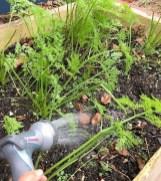 Lovely Vegetable Garden Decoration Ideas For You 18