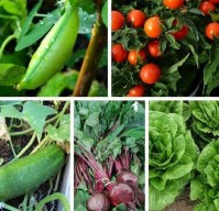 Lovely Vegetable Garden Decoration Ideas For You 29