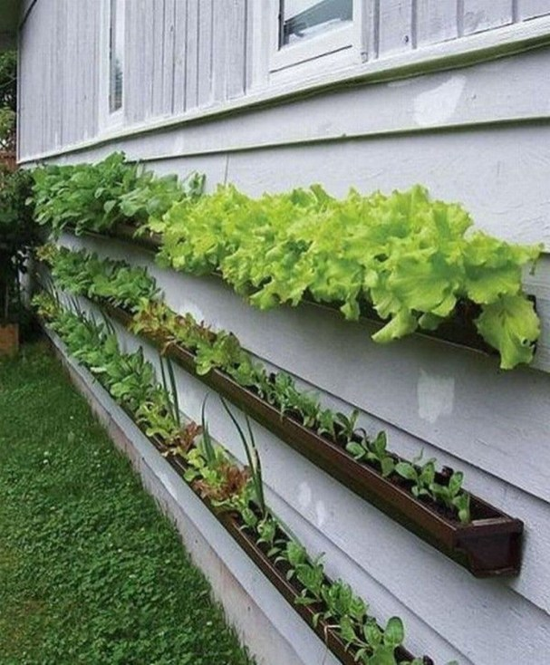 Lovely Vegetable Garden Decoration Ideas For You 35