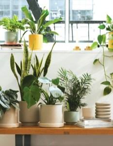 Chic Summer Planter Design Ideas For Summer Outdoor Pool 14