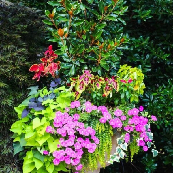 Impressive Summer Planter Design Ideas For Front Yard Decoration 42