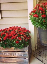 Dreamy Front Door Flower Pots Design Ideas To Increase Your Home Beauty 28