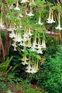 Elegant White Plants Garden Design Ideas For You 06