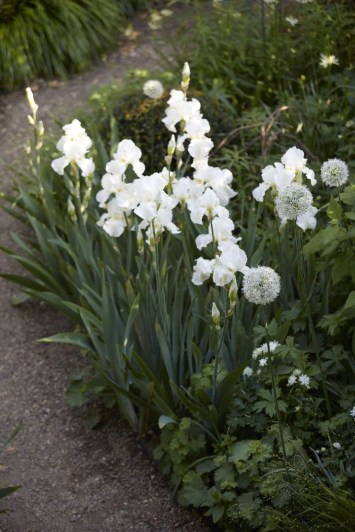 Elegant White Plants Garden Design Ideas For You 38