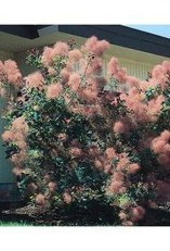 Sophisticated Pink Winter Tree Design Ideas That Looks So Cute 17