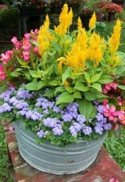 Luxury Container Garden Design Ideas For Your Landscaping Design 12