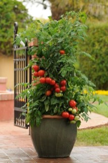 Luxury Container Garden Design Ideas For Your Landscaping Design 18