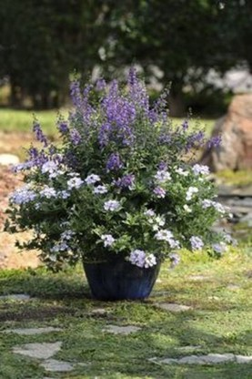 Luxury Container Garden Design Ideas For Your Landscaping Design 35