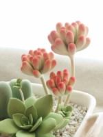 多肉植物セダム(乙女心)クレイクラフト