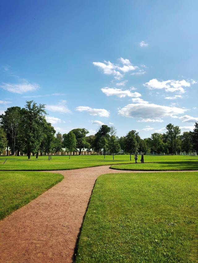 Lawn in the park with trees