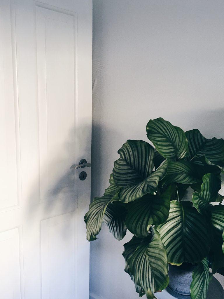 Stor Planteguide