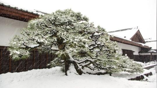 Matsue japon shimane hiver neige chateau musée histoire