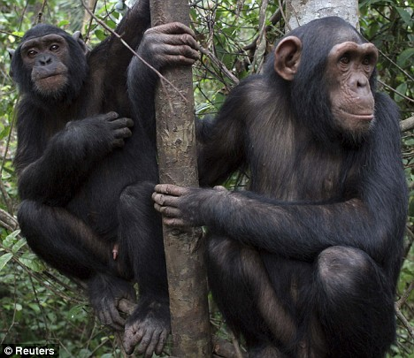 Scientists discover evidence of morality in the Animal