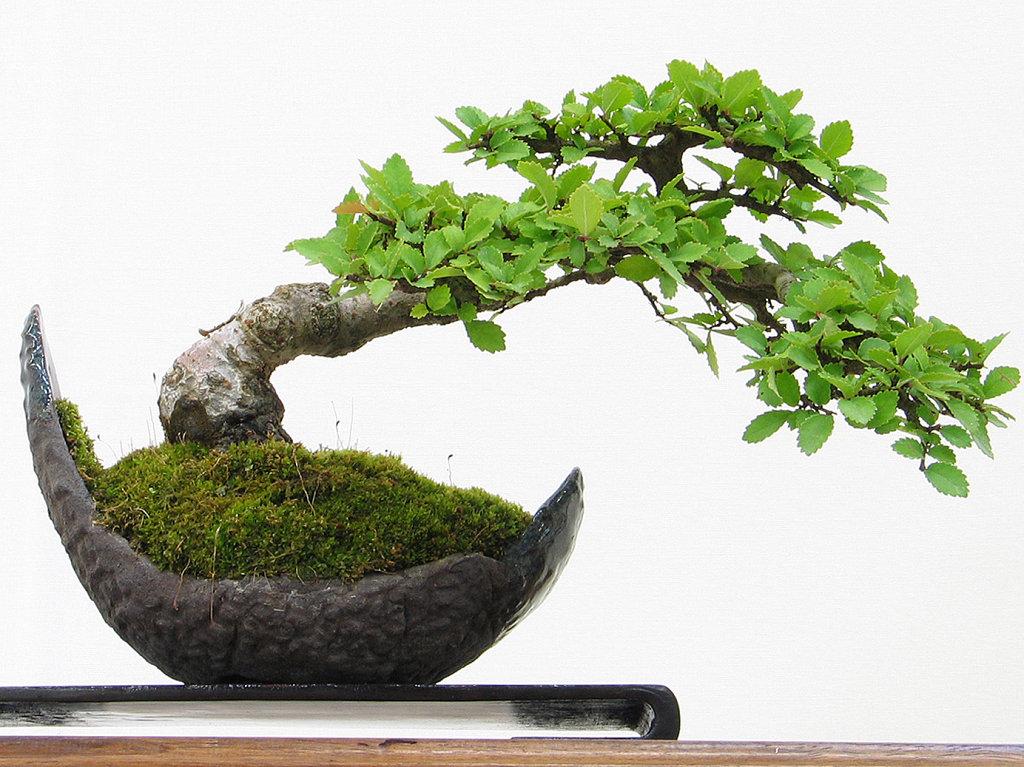cursos gratis de bonsai