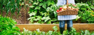 Cursos gratis de huerta organica