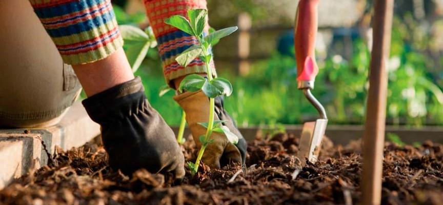 Cursos gratis de jardineria la formaci n para hacer o - Imagenes de jardineria ...