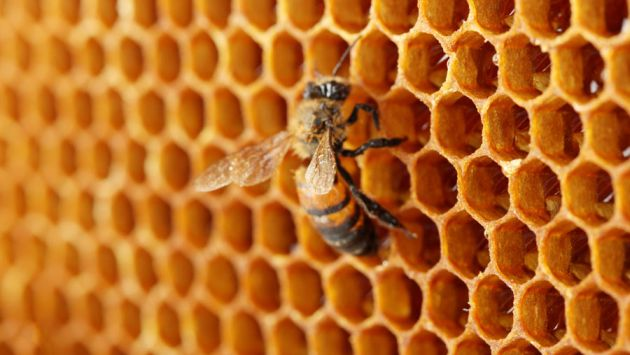 cursos de apicultura gratis