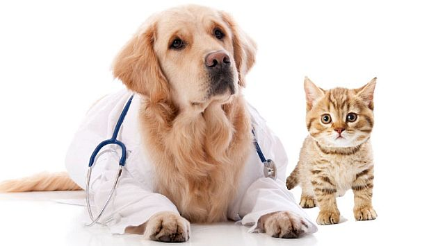 Cursos de veterinaria gratis