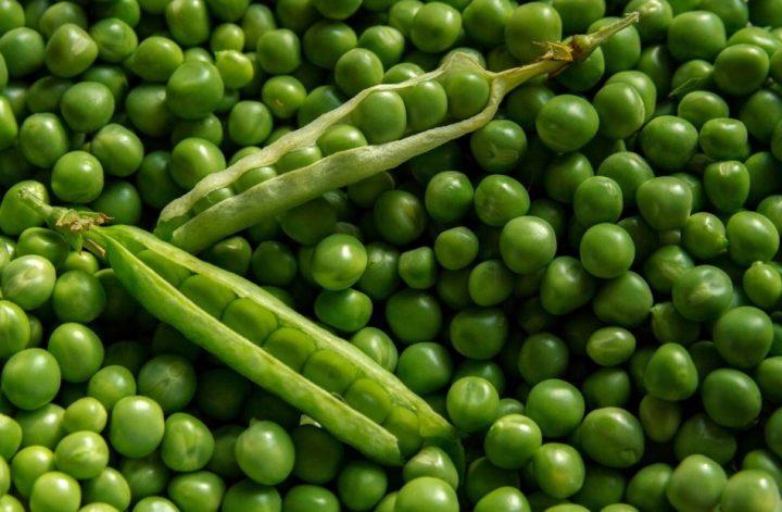 kecambah terbuat dari kacang hijau
