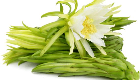 bunga-buah-naga
