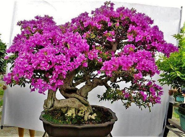 bonsai bunga kertas