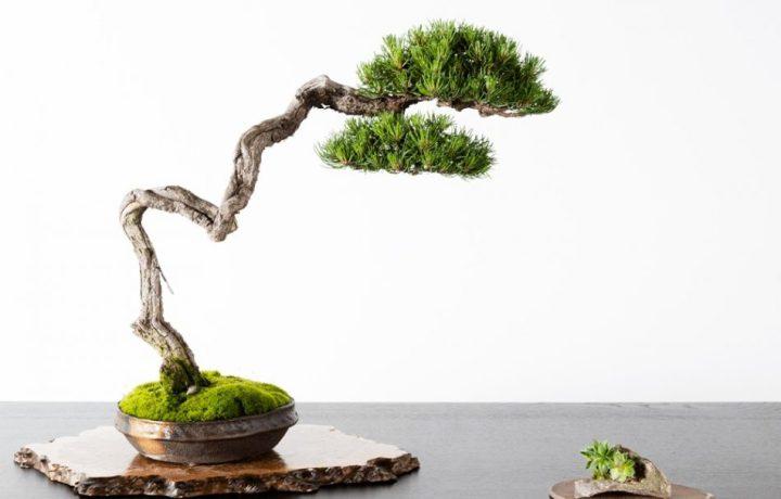 gaya bonsai life style