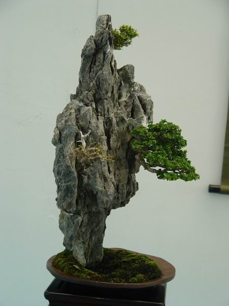 growing in a rock style bonsai