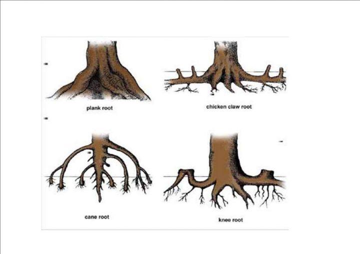 akar dan fungsinya