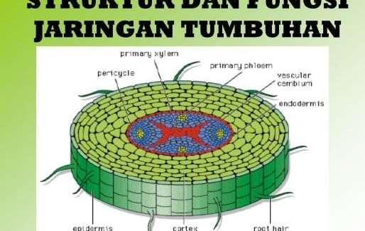 jaringan tumbuhan