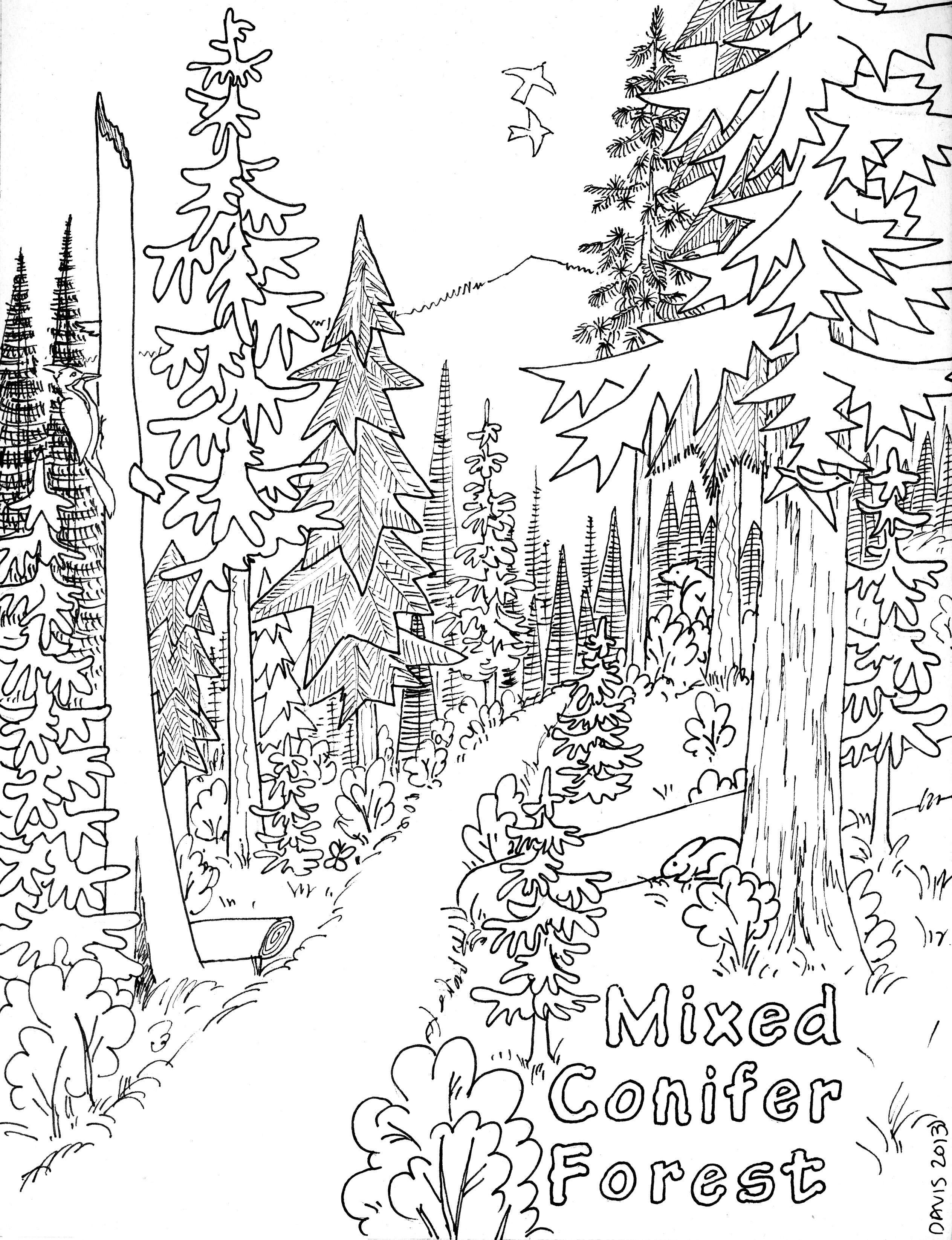 Forest Biome: Forest Biome Coloring Pages