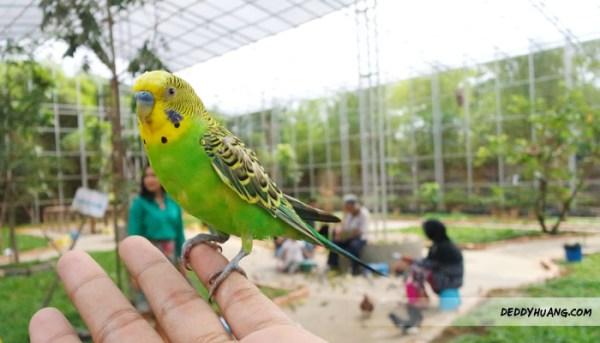 Santai Pegang Burung di Palembang Bird Park
