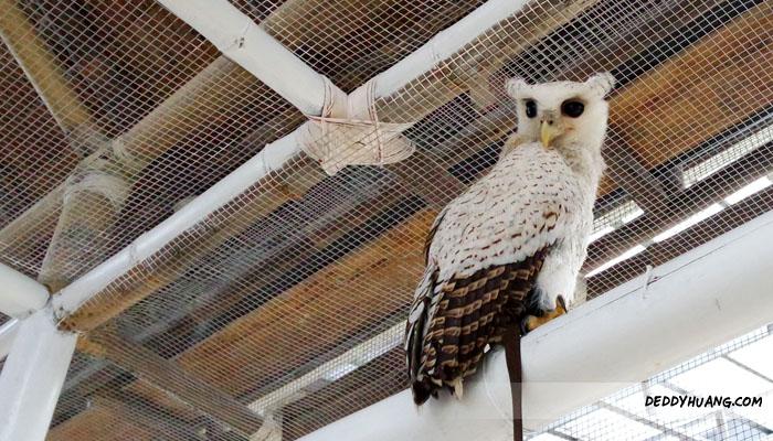 bird11 - Santai Pegang Burung di Palembang Bird Park