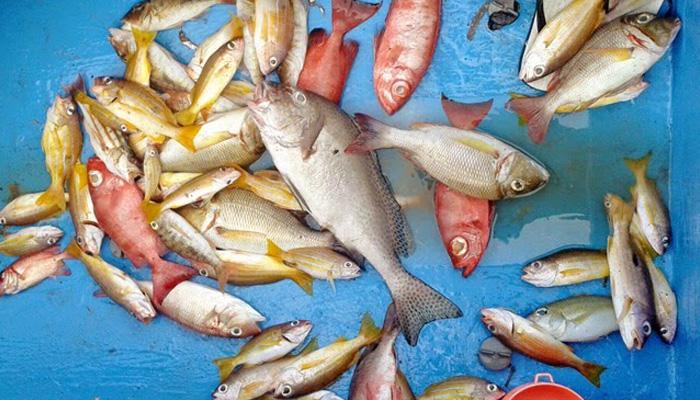 memancing di pulau woru - Visit Tidore Island - Merekam Jejak Wisata Pulau Rempah
