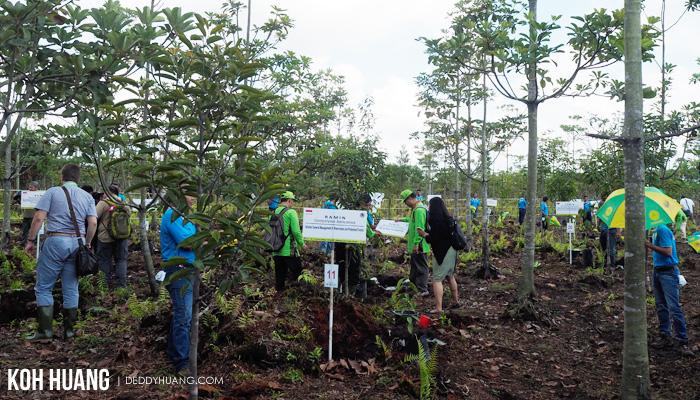 lahan gambut sepucuk - Palembang Tuan Rumah Bonn Challenge 2017