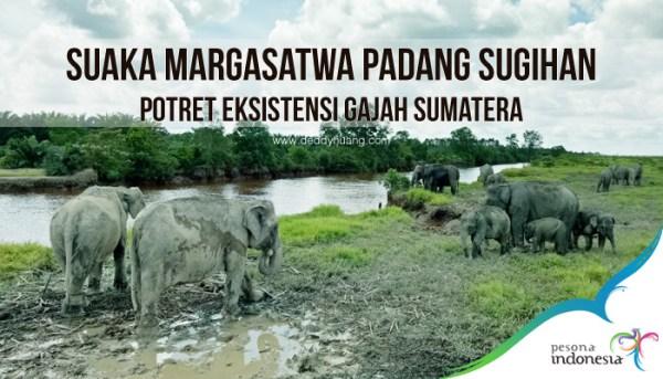 Suaka Margasatwa Padang Sugihan, Potret Eksistensi Gajah Sumatera