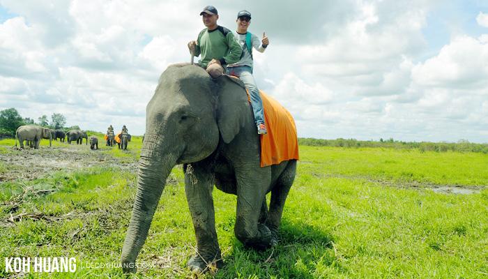wisata gajah - Suaka Margasatwa Padang Sugihan, Potret Eksistensi Gajah Sumatera