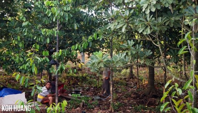kebun plasma nutfah kayu agung - Karena Gambut Kita Bertemu Senja
