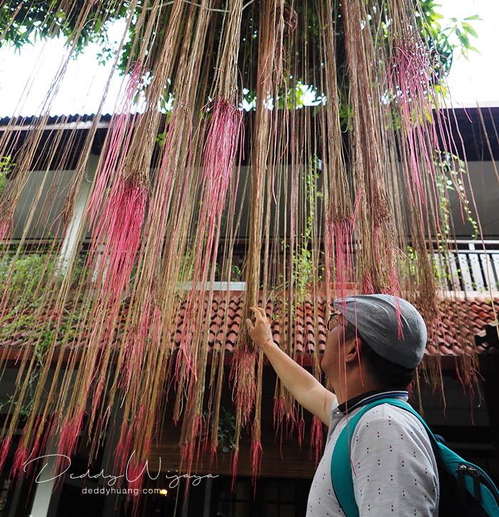 pohon seribu akar - Antara Solo dan Yogjakarta Kita Jatuh Cinta #JadiBisa
