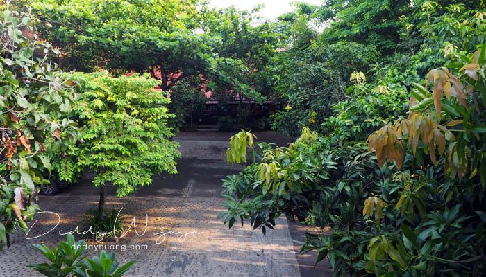 rimbun pohon - Antara Solo dan Yogjakarta Kita Jatuh Cinta #JadiBisa