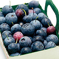 Blueberries boost brain power