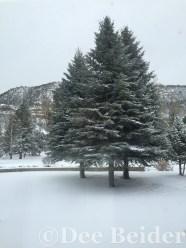 Winter at Vermejo